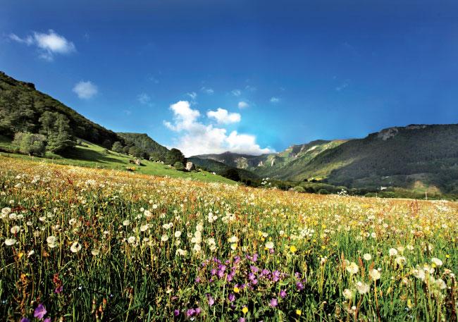 Les prairies fleuries de la zone d'appellation de l'AOP Saint-Nectaire
